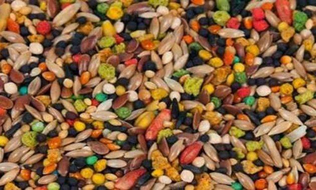 bijian-makanan-kenari