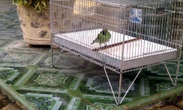 keramba-burung