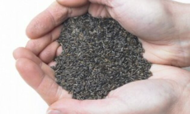 niger-seed