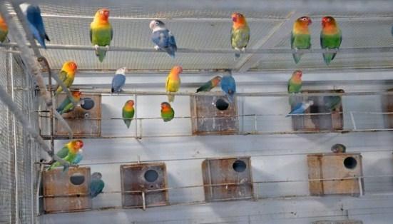 peluang-bisnis-burung