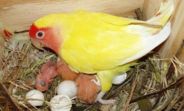 penetasan-telur