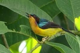 habitat-kolibri