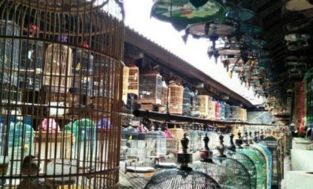 harga-burung-kacer-dipasar-pramuka