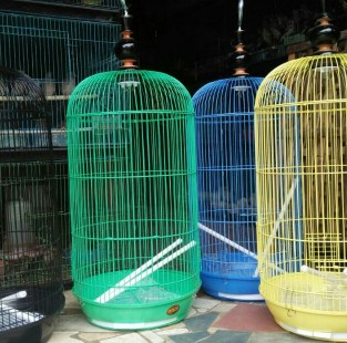 kandang-lovebird