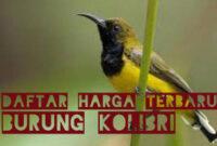 harga-burung-kolibri