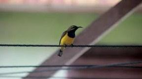kolibri-sriganti