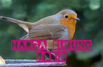 harga-burung-robin
