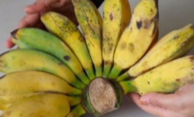 buah-buahan-untuk-burung-jalak-putih