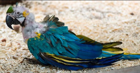 obat-burung-stres-paling-ampuh