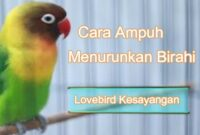 cara-menurunkan-birahi-lovebird