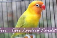 ciri-lovebird-konslet