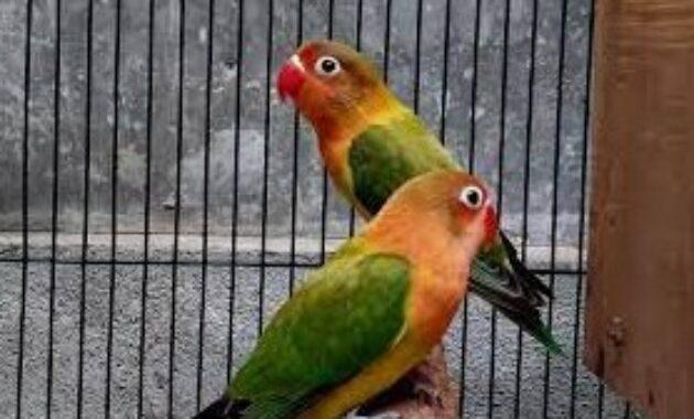 terapi-lovebird-konslet