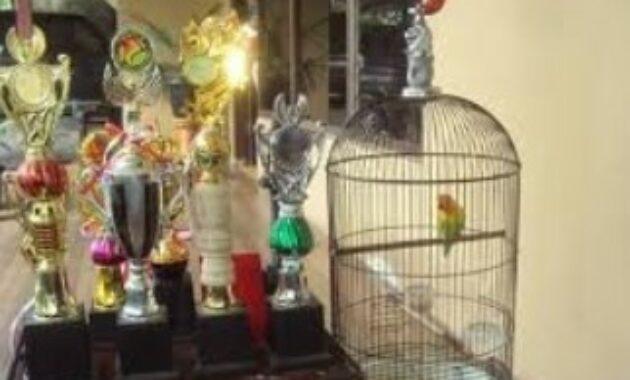 lovebird-juara