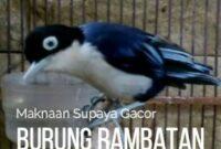 makanan-burung-rambatan